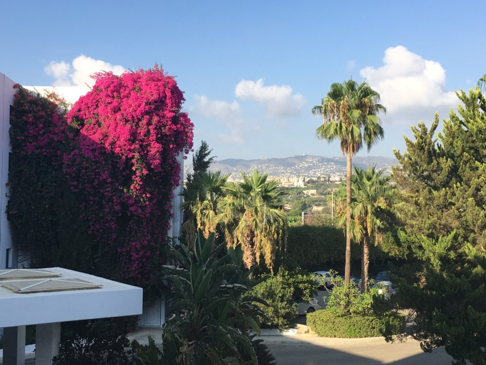 Stunning bougainvillea at the front of the hotel