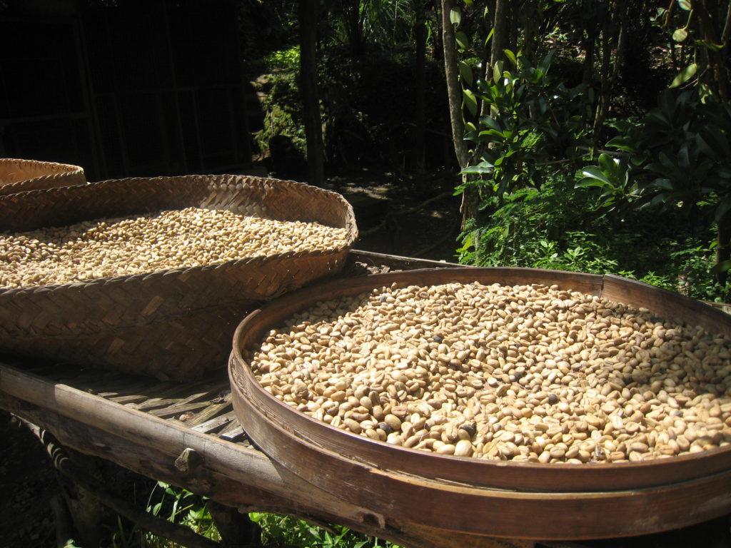 Luwak coffee beans, Ubud, Bali