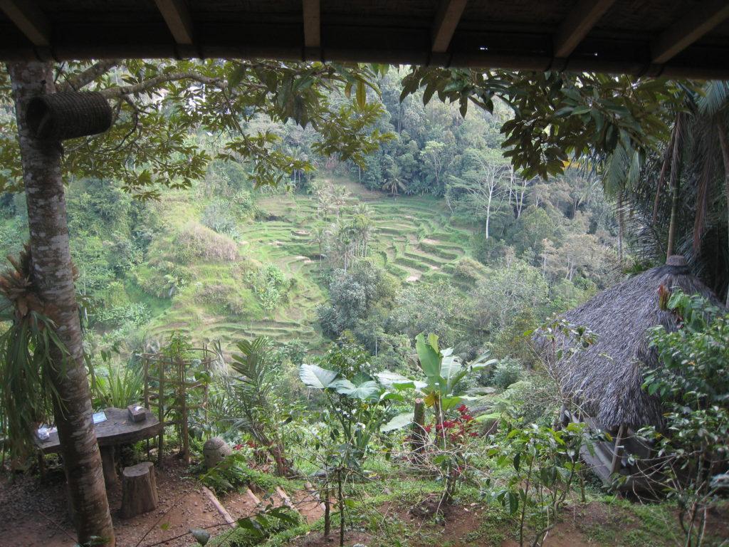 Luwak Coffee Plantation, Ubud, Bali