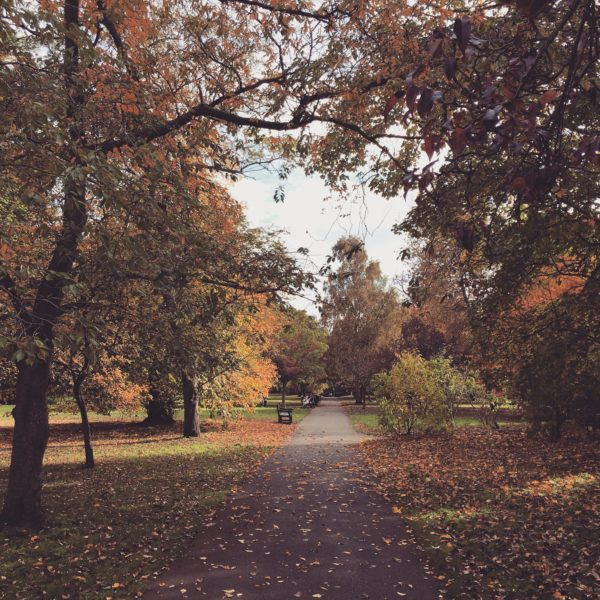 Stunning autumn leaves at Hampton Court Palace and the Magic Garden playground