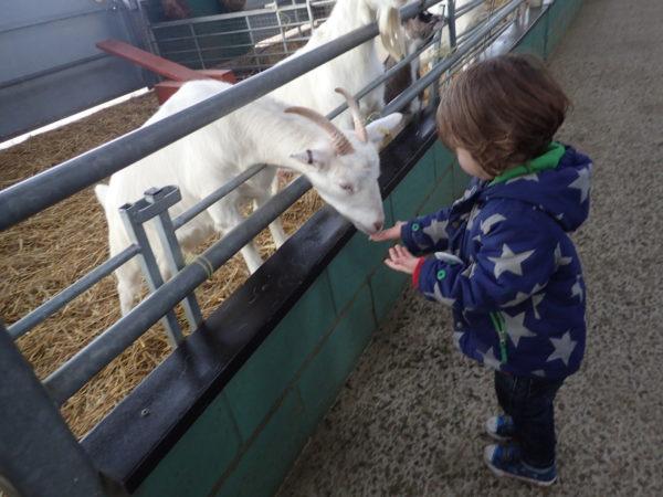 Bocketts Farm, Surrey