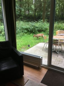Deer outside woodland lodge
