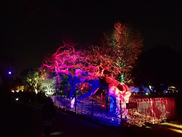 Christmas at Kew – magical light trail at Kew Gardens