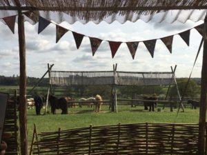 Shetland pony riding club