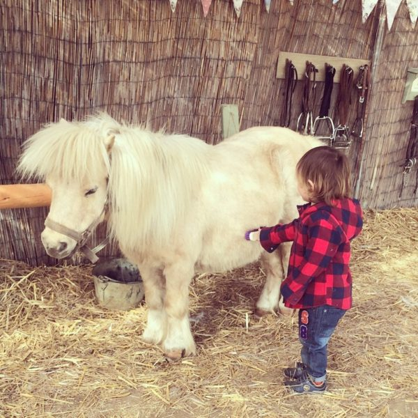 7 wonderful activities for kids at Shetland pony riding club