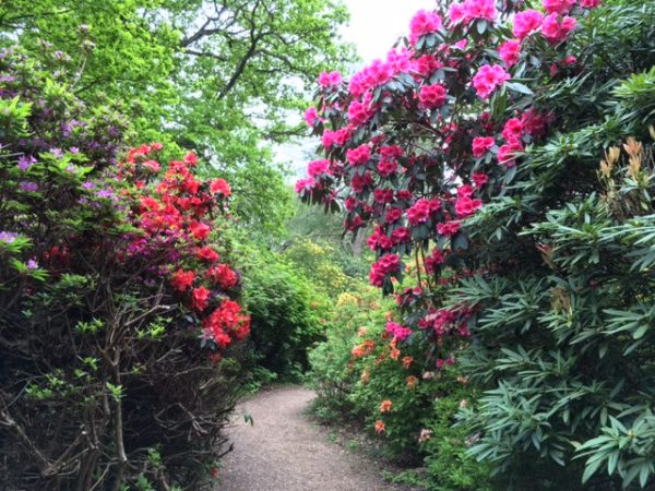 Exploring Isabella Plantation in Richmond Park