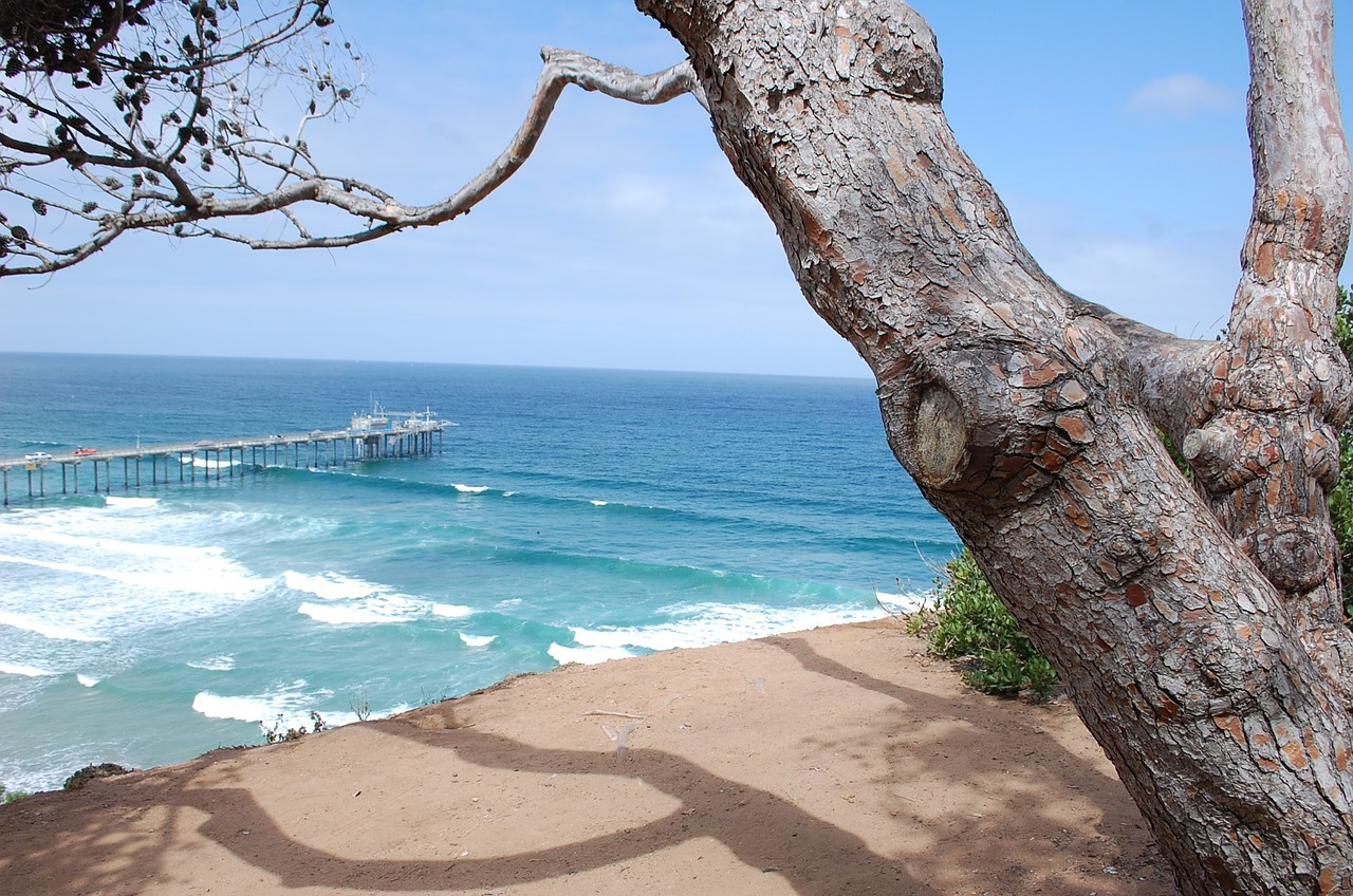 La Jolla beach, San Diego, ocean with waves, tree in foreground